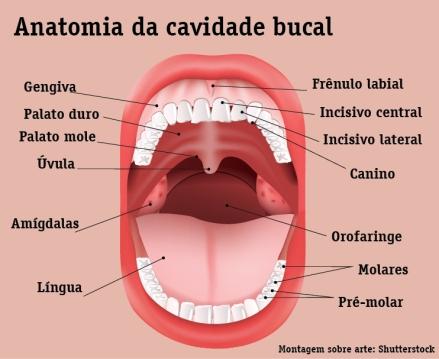 info-amigdalas